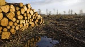 Greenpeace organizeaza o tabara pentru protejarea padurilor virgine din Romania