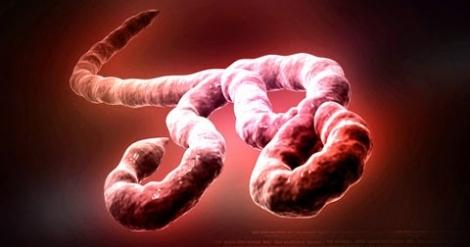 """Uite Ebola! Nu-i Ebola"" - Trei studenti straini de la UMF pusi sub investigatii medicale"