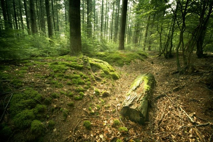 Greenpeace recruteaza voluntari care sa monitorizeze starea padurilor din Romania