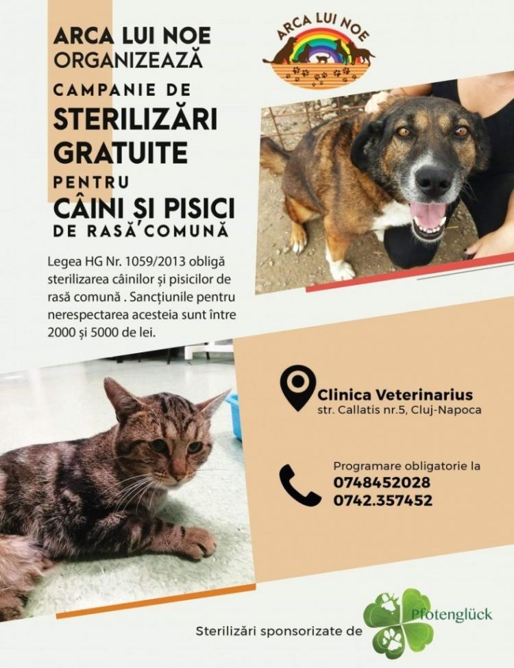 Urmeaza o campanie de sterilizari gratuite pentru caini si pisici