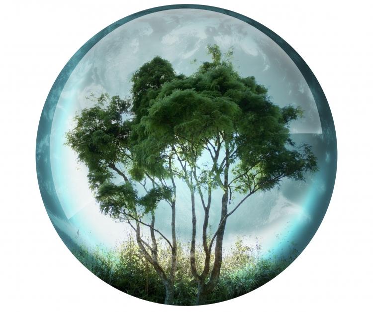 UBB a fost premiata pentru implicarea in protectia mediului
