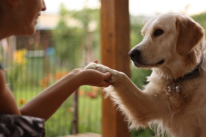 Se deschide la Cluj prima clinica de terapie standard si terapie asistata de animale din Romania