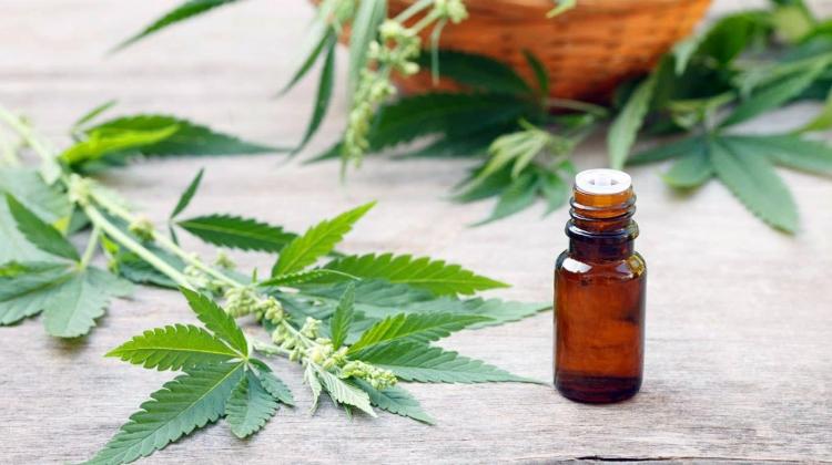 Un fond american vrea sa cultive cannabis medicinal in Transilvania