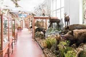 Muzeul Zoologic isi deschide portile la Cluj, acesta gazduieste unele dintre cele mai vechi colectii din tara