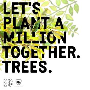 Electric Castle isi provoaca fanii la o plantare de milioane... de arbori in Padurea Gheorgheni