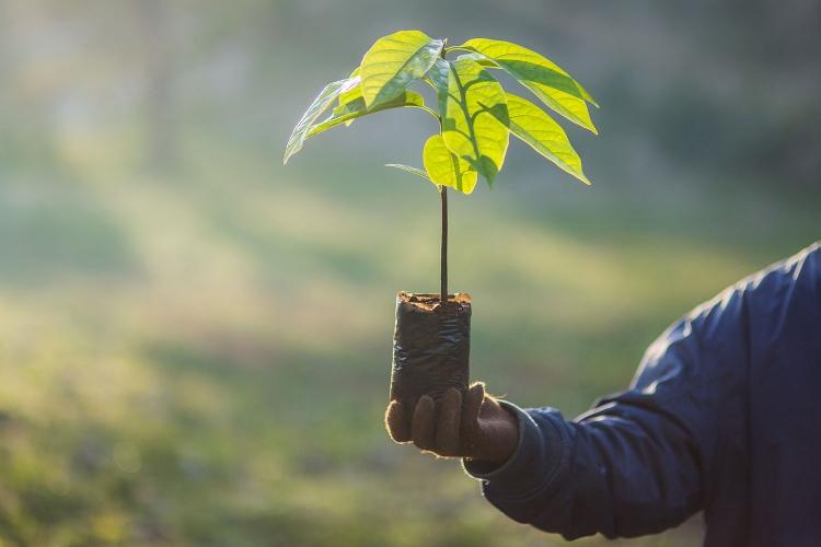 Pentru fiecare 10 luat de studenti in sesiunea de examene va fi plantat un copac