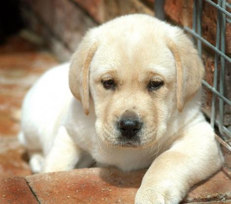 Iubesti cateii? Devino voluntar al Asociatiei Dog Assist Cluj