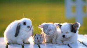 Studenti UBB cu animalele de companie la cursurile universitare