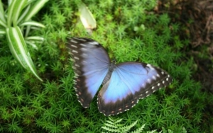 Gradina Botanica gazduieste o expozitie temporara de fluturi exotici