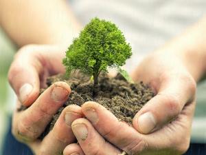 507 note de 10, 507 copaci vor fi plantati. Vezi cine si de ce!