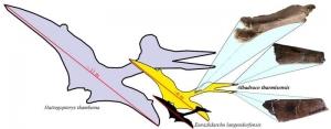 """""""Dragonul zburator"""" din Transilvania a fost descoperit de o echipa de cercetatori romano-americani"""
